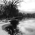 Winter Tree Reflection - Black and White Print by Carol Groenen