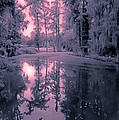 Winterland in the Swamp Poster by DigiArt Diaries by Vicky B Fuller