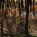 Woods - 2 Print by Linda Knorr Shafer