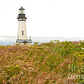 Yaquina Head Lighthouse in Oregon Print by Artist and Photographer Laura Wrede