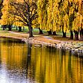 Yellow Autumn Poster by Scott Hovind