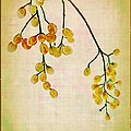 Yellow Berries Poster by Judi Bagwell