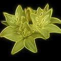 Yellow Lilies on Black Poster by Sandy Keeton