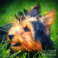 Yorki Print by Angela Doelling AD DESIGN Photo and PhotoArt