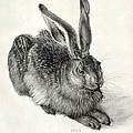 Young Hare, By Durer Poster by Sheila Terry