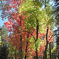 Yummy Fall Colors Poster by Sandy Tracey