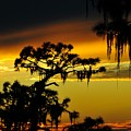 Florida sunset Poster by David Lee Thompson