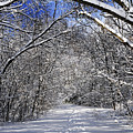 Path in winter forest Poster by Elena Elisseeva