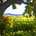 Shady Vineyard Poster by Patricia Stalter