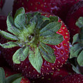 Strawberry 2 Print by Robert Ullmann