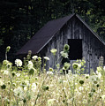 Summer Barn Poster by Rob Travis