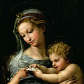 The Virgin of the Rose Print by Raphael
