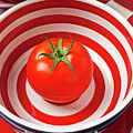 Tomato in red and white bowl Print by Garry Gay