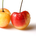 Two Rainier cherries Print by Blink Images