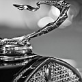 1930 Cadillac Roadster Hood Ornament 2 Poster by Jill Reger