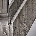 Architectural Detail Poster by Carol Leigh