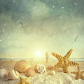 Starfish and seashells  at the beach Print by Sandra Cunningham