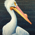 A Great White American Pelican Print by James W Johnson