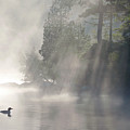 A Loon In The Mist Print by Brian Pelkey