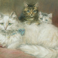 A Persian Cat and Her Kittens Poster by Maud D Heaps