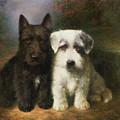 A Scottish and a Sealyham Terrier Poster by Lilian Cheviot