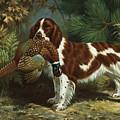 A Welsh Springer Spaniel Holds A Dead by Walter A. Weber