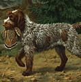 A Wire-haired Pointing Griffon Holds Print by Walter A. Weber