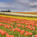 Across colorful fields Print by Mike  Dawson