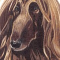Afghan Hound Vignette Poster by Anita Putman