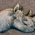 African Black Rhino Poster by Dy Witt