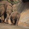 An Indian Rhinoceros And Her Baby Poster by Michael Nichols