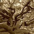 Angel Oak in Sepia Print by Suzanne Gaff