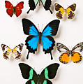 Assorted butterflies Poster by Garry Gay