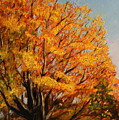 Autumn Leaves at High Cliff Poster by Daniel W Green