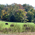 Autumn Pastures Print by Jan Amiss Photography