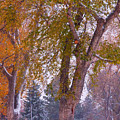 Autumn Snow Park Bench   Poster by James BO  Insogna