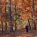 Autumn Stroll Poster by Gayle Johnson