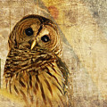 Barred Owl Print by Lois Bryan