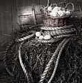 Basket of eggs on a bale of hay Poster by Sandra Cunningham