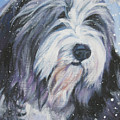 Bearded Collie in Snow Poster by Lee Ann Shepard