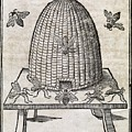 Bees And Beehive, 17th Century Artwork Print by Middle Temple Library