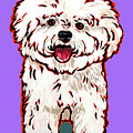 Bichon Frise Poster by Nadi Spencer