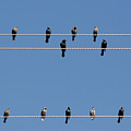 Bird on a Wire Print by Christine Till