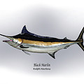 Black Marlin Poster by Ralph Martens