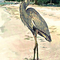 Blue Heron on Shell Beach Poster by Shawn McLoughlin