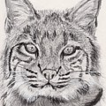Bobcat Print by Marqueta Graham