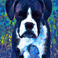 Boxer 20130126v5 Print by Wingsdomain Art and Photography