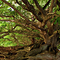 Branches And Roots Print by James Eddy