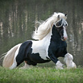 Breathtaking Stallion Poster by Terry Kirkland Cook