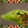 Bromeliad Grasshopper Poster by Bell And Todd